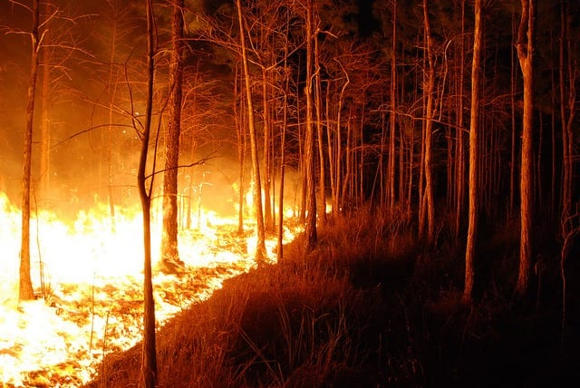 Fire in the woods