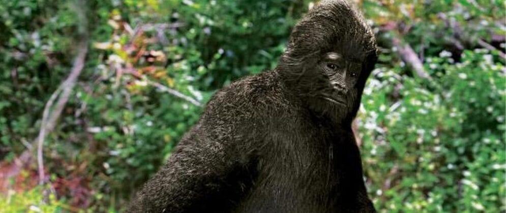 Creature Feature – Bigfoot